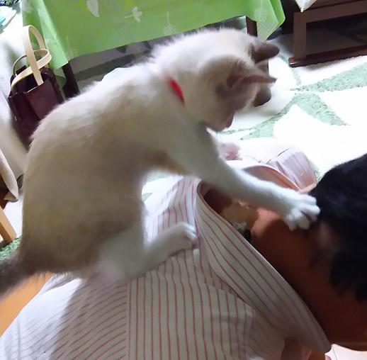 猫を懐かしんでました。