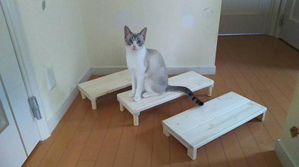 最近の作品と最近の猫♪