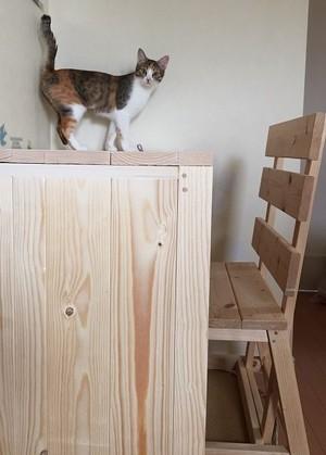猫と机と椅子