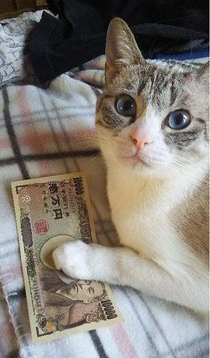 猫に小判と思いきや...