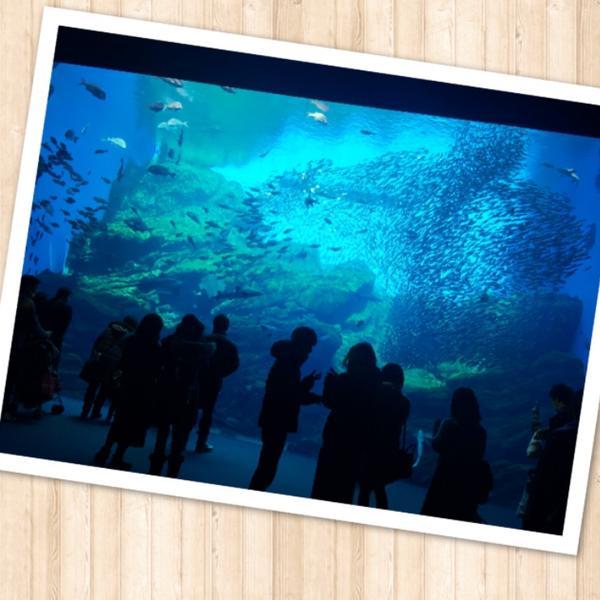 動物園より水族館派です。