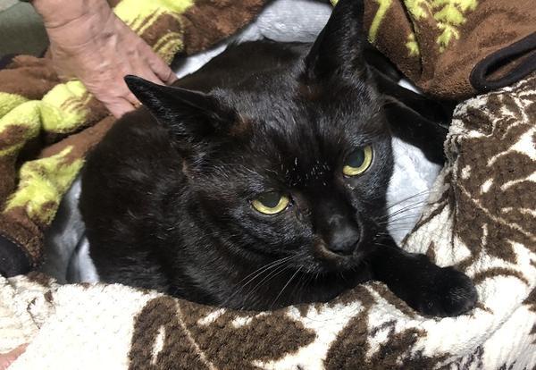 実家のペット 黒猫 2匹