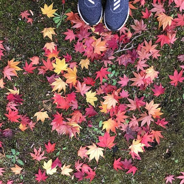 ・・・の秋♪