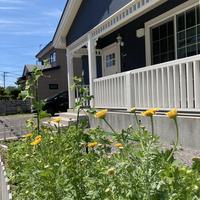 家庭菜園 収穫です!