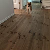 平家と無垢材床と犬